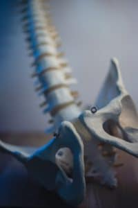 Bones of the pelvis, for help understanding if your pelvic floor needs help.